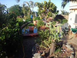 tropischer garten 2